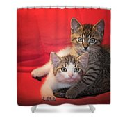 Brothers Kittens Shower Curtain
