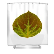 Brown And Green Aspen Leaf 4 Shower Curtain