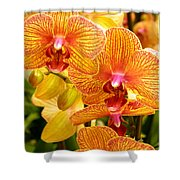 Smiling Brown And Pink Orchids Shower Curtain