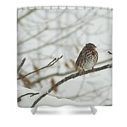 Brown And White Speckled Bird On Snowy Limb Shower Curtain