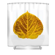 Brown And Yellow Aspen Leaf 2 Shower Curtain