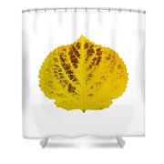 Brown And Yellow Aspen Leaf 3 Shower Curtain