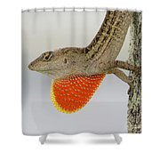 Brown Anole II Shower Curtain