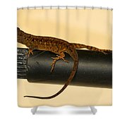 Brown Anole On Pipe Shower Curtain