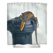 Brown Anole With Dewlap Shower Curtain