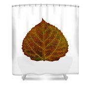 Brown Aspen Leaf 2 Shower Curtain
