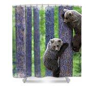 Brown Bear Climbing Lesson Shower Curtain