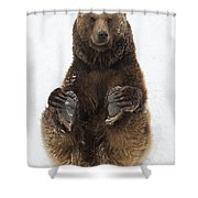 Brown Bear Holding Its Paws Germany Shower Curtain