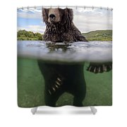 Brown Bear In River Kamchatka Russia Shower Curtain