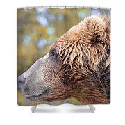Brown Bear Portrait In Autumn Shower Curtain