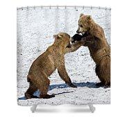 Brown Bear Ursus Arctos Cubs Play Shower Curtain