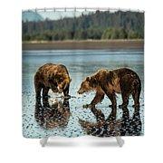Brown Bear, Ursus Arctos, Walking Shower Curtain