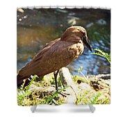 Brown Bird Shower Curtain