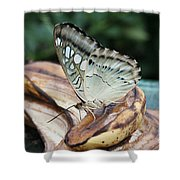 Brown Clipper Butterfly #3 Shower Curtain