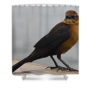 Brown Cowbird Shower Curtain