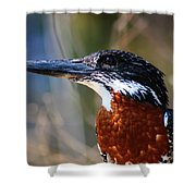 Brown Crested Kingfisher Shower Curtain
