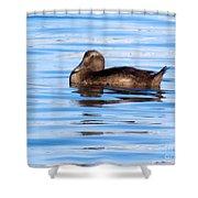 Brown Duck Shower Curtain
