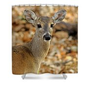 Brown-eyed Girl Shower Curtain