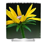 Brown-eyed Susan Shower Curtain
