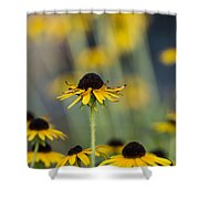 Brown Eyed Susans On Yellow And Green Shower Curtain