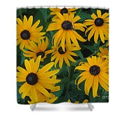 Brown Eyed Susans Shower Curtain