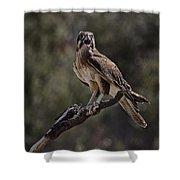 Brown Falcon V2 Shower Curtain