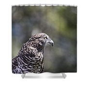 Brown Goshawk V2 Shower Curtain