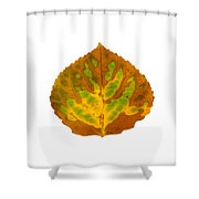Brown Green And Yellow Aspen Leaf 3 Shower Curtain