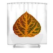 Brown Green Orange And Red Aspen Leaf 1 Shower Curtain
