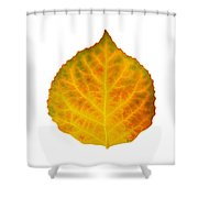 Brown Green Orange Red And Yellow Aspen Leaf 3 Shower Curtain