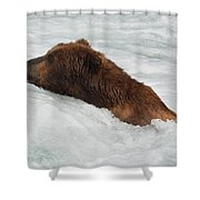 Brown Grizzly Bear Swimming  Shower Curtain