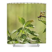 Brown Hawker Dragonfly Shower Curtain