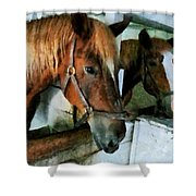 Brown Horse In Stall Shower Curtain