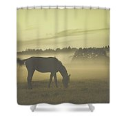 Brown Horse Shower Curtain