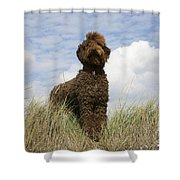 Brown Labradoodle Shower Curtain