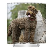 Brown Labradoodle Standing On Tree Stump Shower Curtain