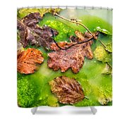 Brown Leaves In Green Pond Shower Curtain
