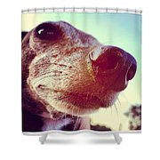 Brown Noser Shower Curtain