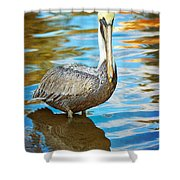Brown Pelican Along The Bayou Shower Curtain