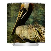 Brown Pelican Beauty Shower Curtain