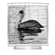 Brown Pelican - Black And White Shower Curtain
