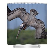 Brown Pelican Diving Academy Bay Shower Curtain