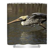 Brown Pelican Fishing Photo Shower Curtain
