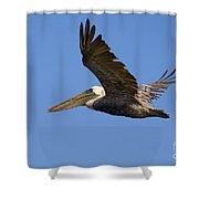 Brown Pelican Flight Shower Curtain