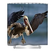 Brown Pelican Flying California Shower Curtain