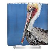 Brown Pelican Head Shot Shower Curtain