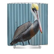 Brown Pelican II Shower Curtain