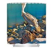 Brown Pelican In San Carlos-sonora Shower Curtain
