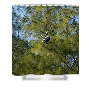 Brown Pelican In The Trees Shower Curtain
