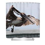 Brown Pelican Landing Shower Curtain